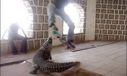 Crocodile_Ollie_Jenkem_WTF1